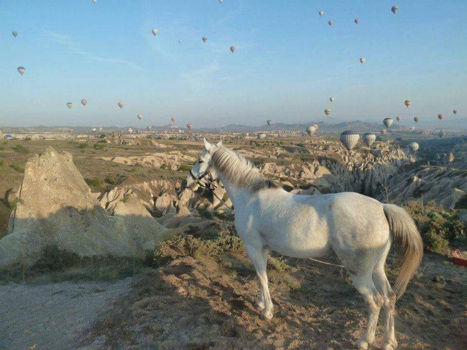 At ve Fayton Turları