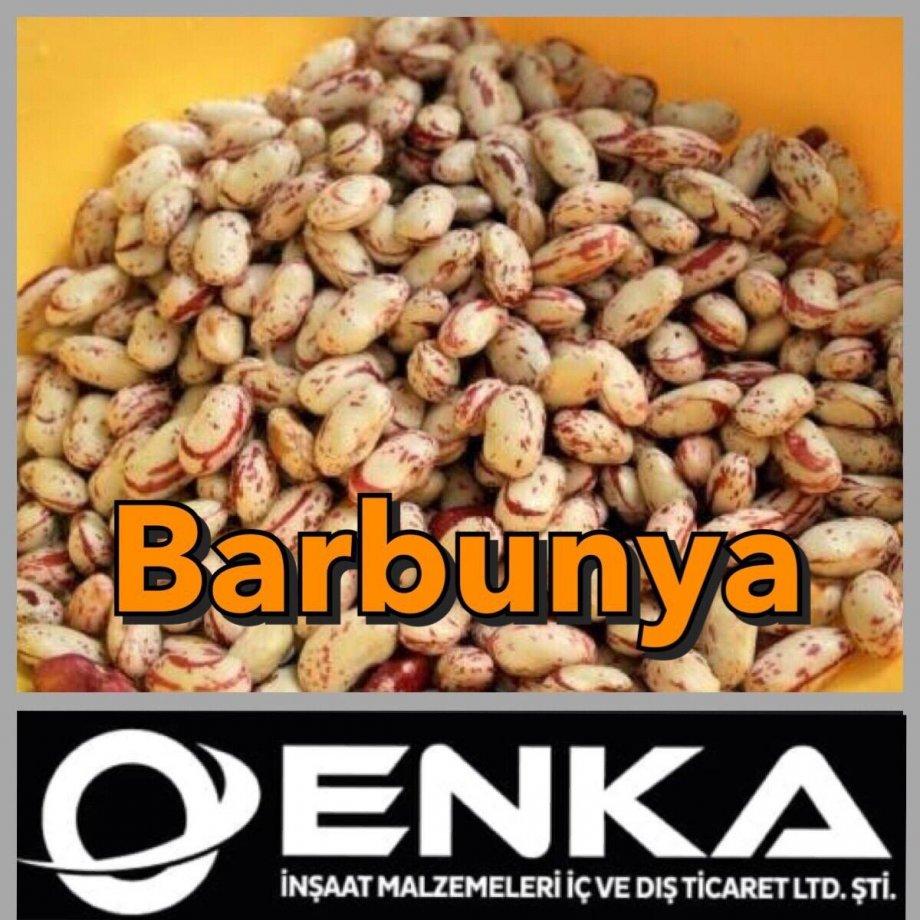 Barbunya