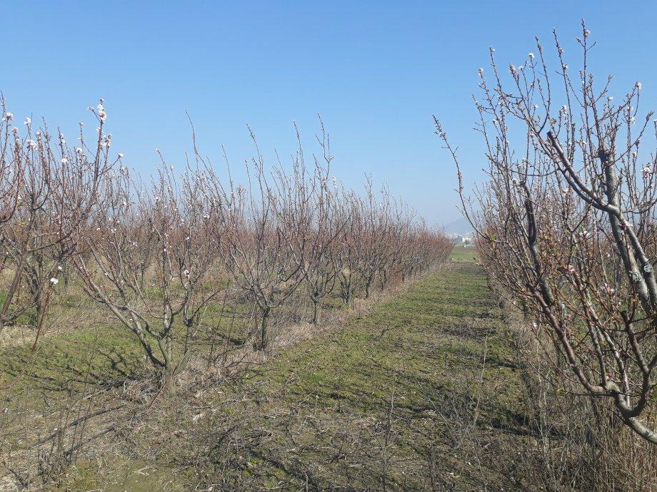 Aydin Satılık Bahçe 18000 m2 İncirliova 2.000.000 TL
